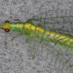 Apertochrysa edwardsi (A Green Lacewing) at Lilli Pilli, NSW - 3 Jun 2020 by jbromilow50