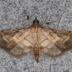 Cnaphalocrocis poeyalis (Lesser rice leaf-roller) at Lilli Pilli, NSW - 5 Jun 2020 by jbromilow50