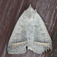 Pantydia capistrata (An Erebid moth) at Lilli Pilli, NSW - 5 Jun 2020 by jbromilow50