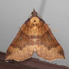 Anachloris uncinata (Anachloris uncinata) at Lilli Pilli, NSW - 5 Jun 2020 by jbromilow50