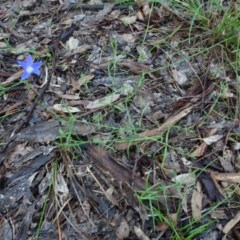 Wahlenbergia sp. (Bluebell) at Murrumbateman, NSW - 20 Jun 2020 by AndyRussell