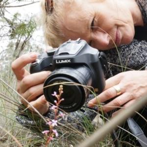 Stylidium graminifolium at Aranda Bushland - 5 Apr 2014