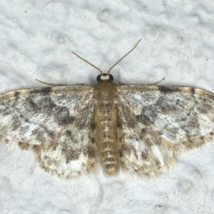 Idaea ferrilinea at Ainslie, ACT - 27 Nov 2019