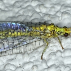 Italochrysa insignis at Ainslie, ACT - 15 Apr 2020
