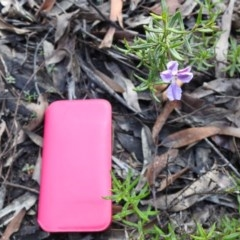 Coopernookia barbata (Purple Coopernookia) at Mittagong, NSW - 15 Jul 2020 by GlossyGal