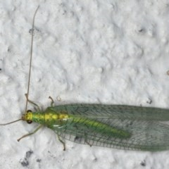 Pseudomallada edwardsi (A Green Lacewing) at Ainslie, ACT - 5 Dec 2019 by jbromilow50
