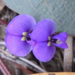 Hardenbergia violacea (False Sarsaparilla) at Black Mountain - 25 Jul 2020 by Christine