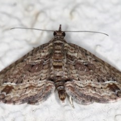 Chloroclystis filata (Filata Moth, Australian Pug Moth) at Ainslie, ACT - 15 Jul 2020 by jbromilow50