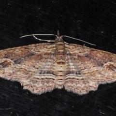 Chloroclystis filata (Filata Moth) at Guerilla Bay, NSW - 1 Aug 2020 by jbromilow50