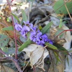 Hovea heterophylla (Common Hovea) at Mount Taylor - 2 Aug 2020 by MatthewFrawley