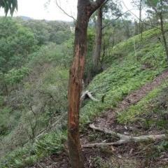 Cervidae (Deer (unknown species)) at Brogo, NSW - 3 Aug 2020 by JackieMiles