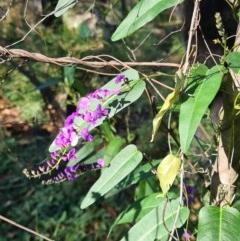 Hardenbergia violacea (False sarsaparilla) at Ulladulla Wildflower Reserve - 5 Aug 2020 by gem.ingpen@gmail.com