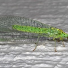 Pseudomallada edwardsi (A Green Lacewing) at Ainslie, ACT - 27 Nov 2019 by jbromilow50