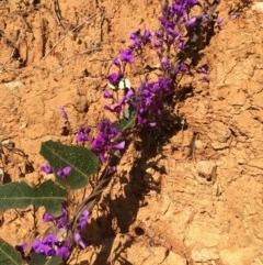 Hardenbergia violacea (False Sarsaparilla) at Wodonga - 11 Aug 2020 by Alburyconservationcompany
