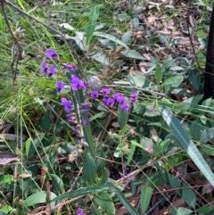 Hardenbergia violacea (False sarsaparilla) at Ulladulla Wildflower Reserve - 5 Aug 2020 by margotallatt
