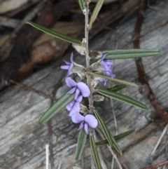 Hovea heterophylla (Common Hovea) at Mount Ainslie - 14 Aug 2020 by jbromilow50
