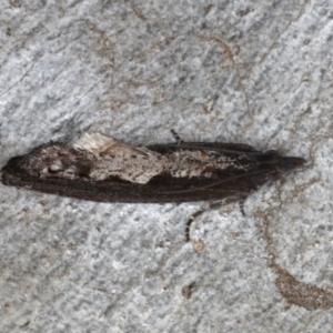 Strepsicrates macropetana at Mount Ainslie - 14 Aug 2020