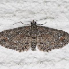 Chloroclystis filata (Filata Moth, Australian Pug Moth) at Ainslie, ACT - 17 Aug 2020 by jbromilow50