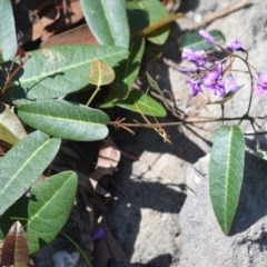 Hardenbergia violacea (False sarsaparilla) at Bamarang Nature Reserve - 19 Aug 2020 by plants