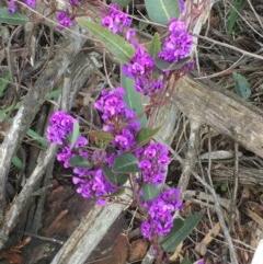 Hardenbergia violacea (False Sarsaparilla) at Mount Ainslie - 22 Aug 2020 by JaneR