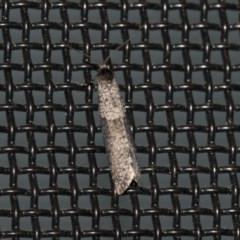 Conoeca guildingi (A case moth) at Higgins, ACT - 10 Jun 2020 by AlisonMilton