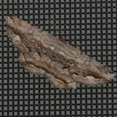 Scioglyptis lyciaria (White-patch Bark Moth) at Higgins, ACT - 31 Mar 2020 by AlisonMilton