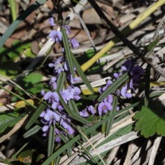 Hovea heterophylla (Common Hovea) at Point 5827 - 27 Aug 2020 by ConBoekel
