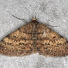 Scopula rubraria (Reddish Wave) at Mossy Point, NSW - 27 Aug 2020 by jbromilow50