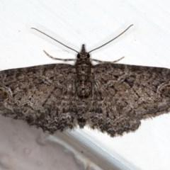 Chloroclystis filata (Filata Moth, Australian Pug Moth) at Ainslie, ACT - 30 Aug 2020 by jbromilow50