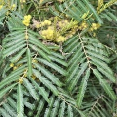 Acacia filicifolia at Bamarang Nature Reserve - 31 Aug 2020 by plants