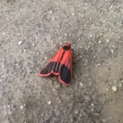Scoliacma bicolora (Red Footman Moth) at Gigerline Nature Reserve - 25 Nov 2018 by Liam.m