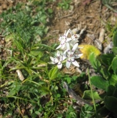 Wurmbea dioica subsp. dioica (Early Nancy) at Mount Painter - 3 Sep 2020 by dwise