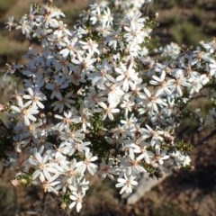 Olearia microphylla (Olearia) at O'Connor, ACT - 6 Sep 2020 by RWPurdie