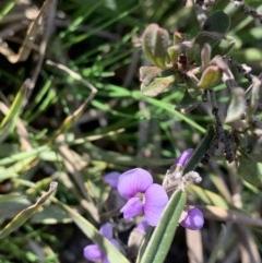 Hovea heterophylla (Common Hovea) at Nanima, NSW - 7 Sep 2020 by 81mv