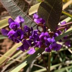Hardenbergia violacea (False Sarsaparilla) at Nanima, NSW - 7 Sep 2020 by 81mv
