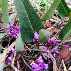 Hardenbergia violacea (False Sarsaparilla) at Dryandra St Woodland - 8 Sep 2020 by RWPurdie
