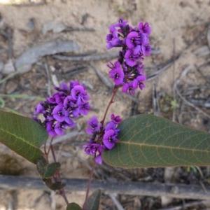 Hardenbergia violacea at Deakin, ACT - 17 Sep 2020