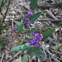 Hardenbergia violacea at Hughes Grassy Woodland - 17 Sep 2020