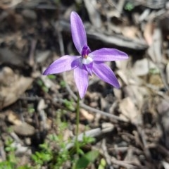 Glossodia major (Wax lip orchid) at Black Mountain - 17 Sep 2020 by ClubFED