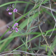 Glycine clandestina (Twining glycine) at Dryandra St Woodland - 17 Sep 2020 by ConBoekel