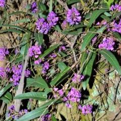 Hardenbergia violacea (False Sarsaparilla) at Wingecarribee Local Government Area - 18 Sep 2020 by plants