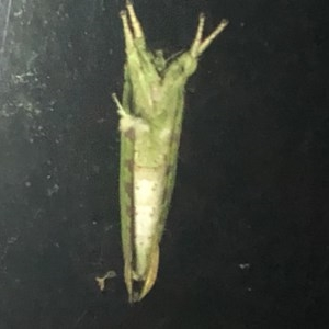 Unidentified at suppressed - 7 Oct 2020