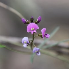 Glycine clandestina (Twining glycine) at Red Hill Nature Reserve - 19 Sep 2020 by LisaH