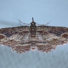 Chloroclystis filata (Filata Moth, Australian Pug Moth) at Ainslie, ACT - 16 Sep 2020 by jbromilow50