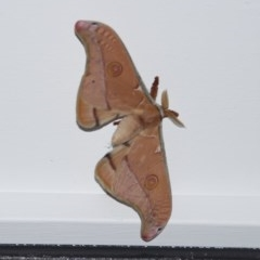 Unidentified Moth (TBC) at WI Private Property - 21 Sep 2020 by wendie