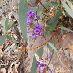 Hardenbergia violacea (False Sarsaparilla) at Black Mountain - 27 Sep 2020 by Liam.m