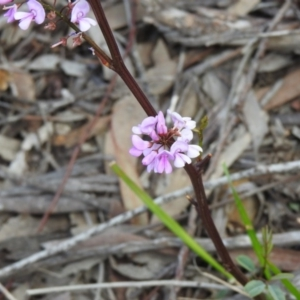 Indigofera australis subsp. australis at Black Mountain - 27 Sep 2020
