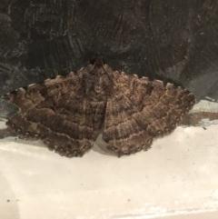 Diatenes aglossoides (An Erebid Moth) at Broughton Vale, NSW - 26 Sep 2020 by Nivlek