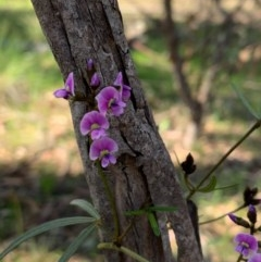 Glycine clandestina (Twining glycine) at Flea Bog Flat, Bruce - 1 Oct 2020 by JVR