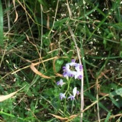 Unidentified Plant (TBC) at EDM Private Property - 30 Sep 2020 by Evelynm